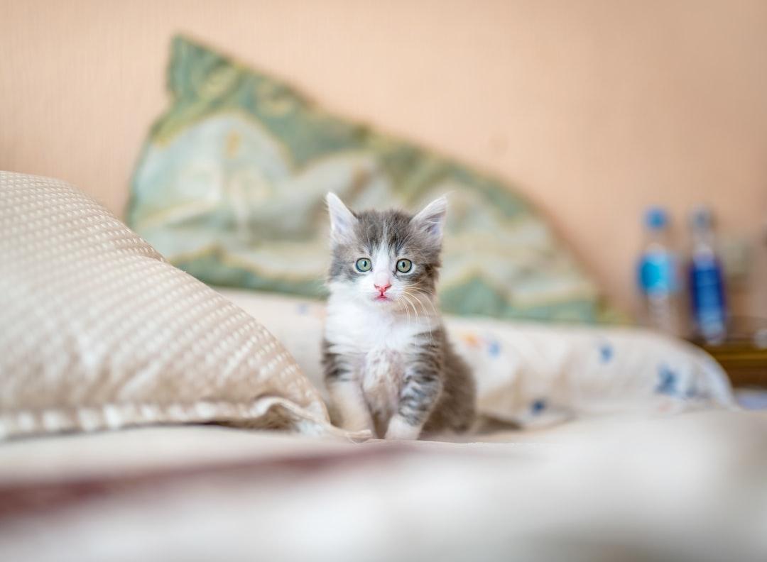 comment accueillir un chat