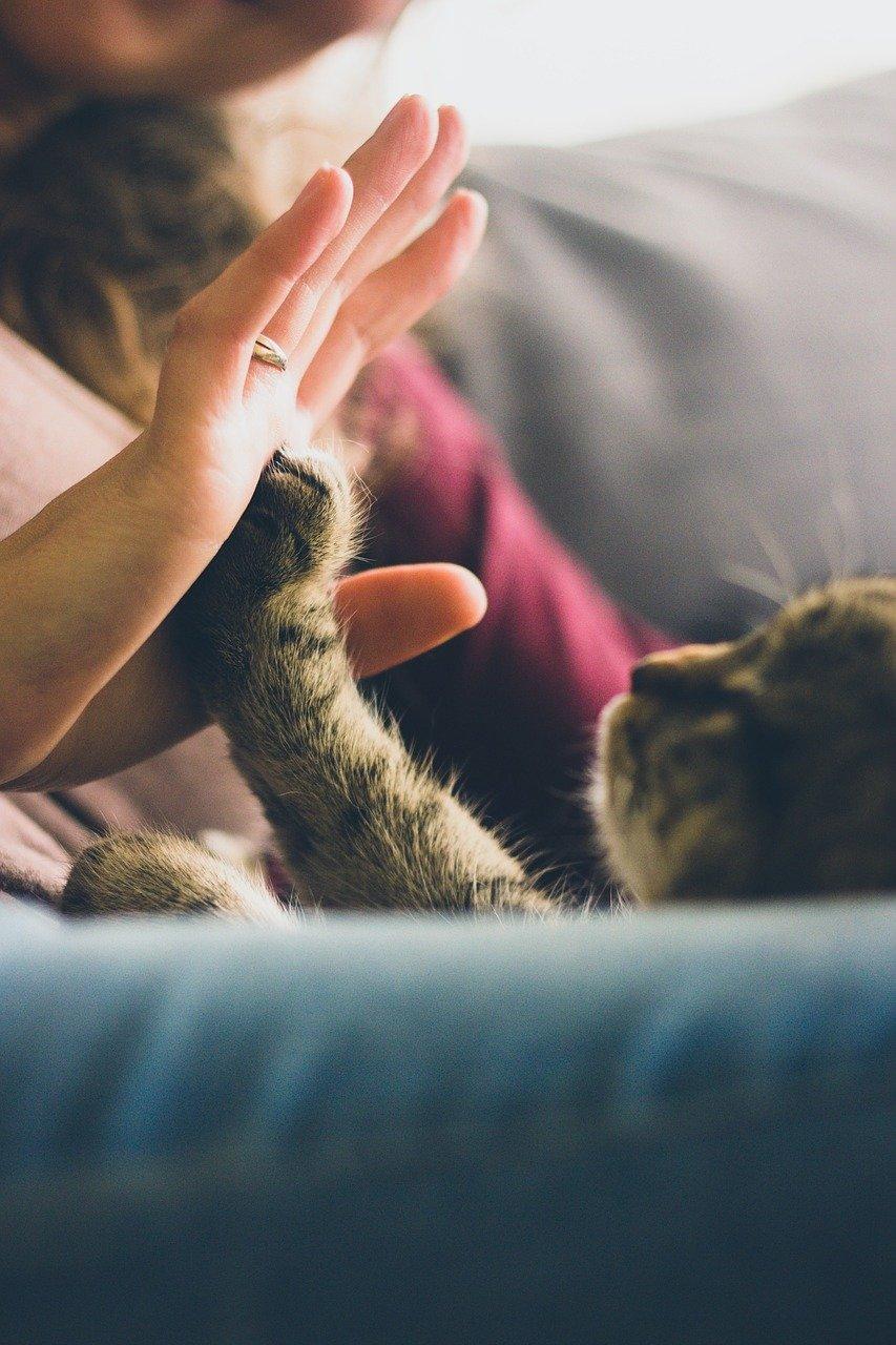 accueillir un chat
